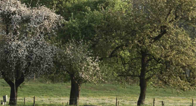 Stokkum — Natuurboerderij Wittenhorst